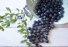Sloe Berries Stock Photos