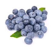 Sloe berry Royalty Free Stock Photos
