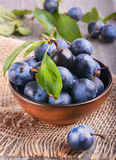 Sloe, blackthorn. Sloe in dark  ceramic bowl Royalty Free Stock Photography