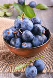 Sloe, blackthorn. Sloe in dark  ceramic bowl Royalty Free Stock Images