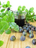 Sloe fruits liquor Stock Image