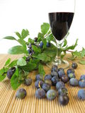 Sloe fruits wine Stock Photos