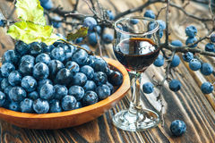 Sloe gin. Glass of blackthorn homemade light sweet reddish-brown liquid. Sloe-flavoured liqueur or wine decorated with fresh juicy ripe prunus spinosa berries royalty free stock image
