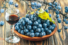 Sloe gin. Glass of blackthorn homemade light sweet reddish-brown liquid. Sloe-flavoured liqueur or wine decorated with fresh juicy ripe prunus spinosa berries stock image