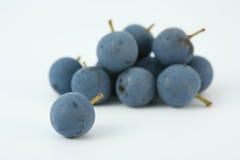 sloe tarninowy jagody berry zdjęcia stock