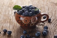 Sloes Stock Photography