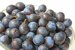 Sloes - Fruits of blackthorn Royalty Free Stock Photo