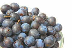 Sloes - Fruits of blackthorn Royalty Free Stock Photos