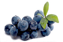 Sloes isolated Royalty Free Stock Image
