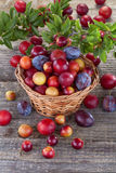 Sloes and plums. Sloes and domestic organically grown plums on the table Stock Image