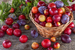 Sloes and plums Stock Images