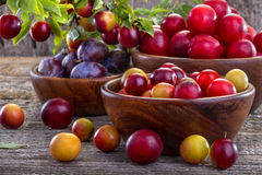 Sloes and plums Royalty Free Stock Images