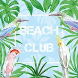 Slogan beach club birds and leaves blue background Stock Images
