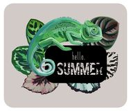 Slogan hello summer with chameleon Royalty Free Stock Photography