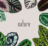 Slogan nature leaves frame Stock Photography
