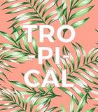 Slogan tropicale su un fondo rosa con le foglie Immagini Stock