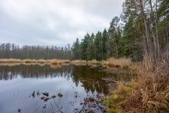 Slokas sjö i den Kemeri regionen Fotografering för Bildbyråer