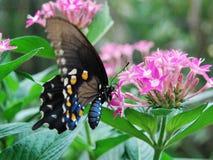 Slokje van Nectar Royalty-vrije Stock Foto