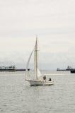 Sloop Sail Boat in Long Beach Harbor Stock Image