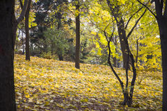 Slope in autumn park. Royalty Free Stock Image