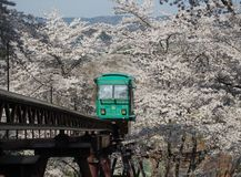 Slope car passing through tunnel of cherry blossom (Sakura) Stock Photography