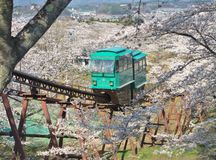 Slope car passing through tunnel of cherry blossom (Sakura) Stock Photos