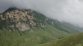 On the slope of the Caucasus mountains, horses graze peacefully, eating the lush green of the local meadows. In the distance, rain stock footage