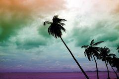 Slope of coconut palm tree and coloful sky background. On sea stock photos