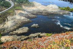 Slope covered with flowers and rocky shore royalty free stock photo
