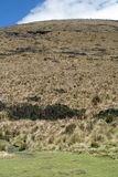 Grass covered slope in the Antisana Ecological Reserve, Ecuador Stock Images
