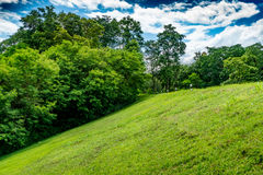 Slope of grass. Slope of green grass with trees and blue sky royalty free stock images