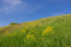 Slope of a green hill and blue clear sky Royalty Free Stock Photos