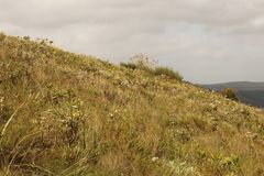 SLOPE OF A HILL COVERED IN GRASSLAND AND WILDFLOWERS AGAINST A GREY SKY. View of green vegetation covered sloping hill against a grey cloudy sky stock image