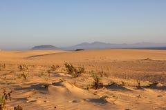 Slope hill sand on yellow dunes on blue sky background. Sunrise, morning. Sustainable ecosystem. Canary island Stock Image