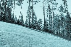Slope lawn and the wood in distance blue tone Royalty Free Stock Photo