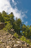 A slope of a mountain. With trees and rocks in the Carpathian. Romania Stock Photos