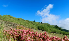 Slope in nature Royalty Free Stock Images