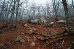 Slope with roots on rocky red ground Stock Photos