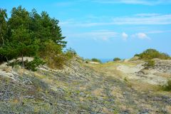 Slope of the sand dune, fixed by a special cell of twigs Royalty Free Stock Photography