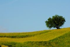 Slope and tree Stock Photos