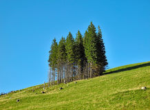 Slope trees Royalty Free Stock Images