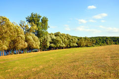 Slope with trees by the river Stock Photography