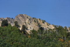 Sloped Cliffs. Autumn colors are starting to take hold on the trees in  Butler Fork trail with Mount Raymond at 10241 feet on the other side of the valley know Stock Photography