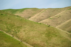 Sloped hills. And meadows, New Zealand Royalty Free Stock Photo