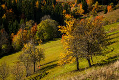 Sloped meadow in autumn Royalty Free Stock Images