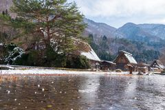 The sloped-roof and thatched-roof houses of snow cover and started to melt at Shirakawa-go. Japan royalty free stock image