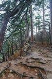 The slopes of Ai-Petri mountain. Rain pot. Big Yalta, Crimea, Ukraine. December 2008 stock photo