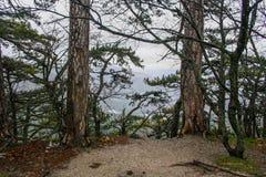 The slopes of Ai-Petri mountain. Rain pot. Big Yalta, Crimea, Ukraine. December 2008 stock photos