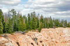 Slopes of Bryce canyon. Utah. USA. Stock Images