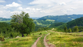 The slopes of the Carpathian Mountains. The landscape of green hills.  Stock Images